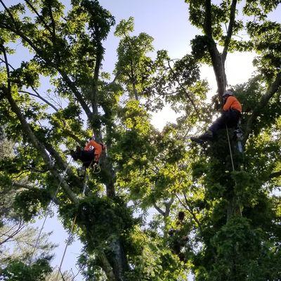 ABX. tree service Mount Vernon, NY Thumbtack