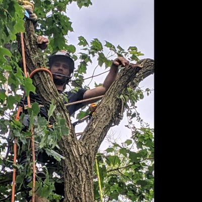 River City Tree Service Inc. Grand Rapids, MI Thumbtack