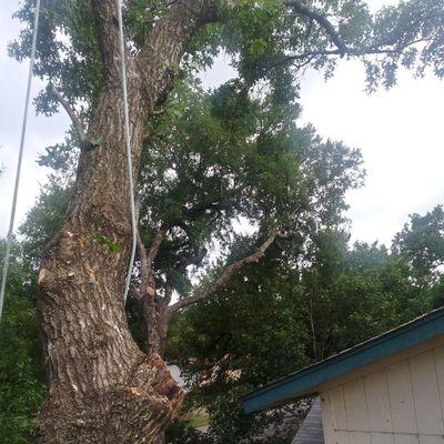 Relampago Tree Services Leander, TX Thumbtack