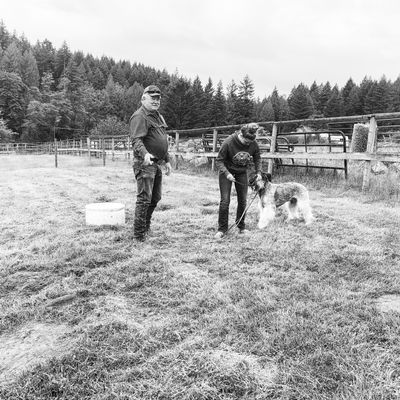 The 10 Best Dog Trainers in Vancouver, WA (with Free Estimates)