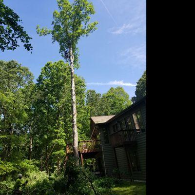 INNOVATIONS TREE SERVICE FENCE DECK-REPAIR Raleigh, NC Thumbtack
