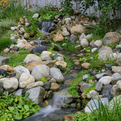 Bill Timmons Landscaping and Gardening San Francisco, CA Thumbtack