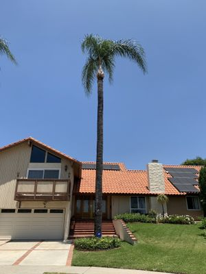 Regs Tree and Lawn Services Corona, CA Thumbtack