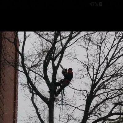 Cruz Tree service Olmsted Falls, OH Thumbtack