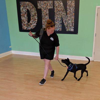Dog Training Now Schaumburg, IL Thumbtack