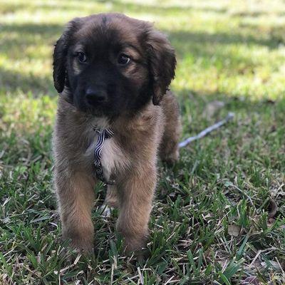 Always Faithful Dog Training Of Pinellas County Palm Harbor, FL Thumbtack