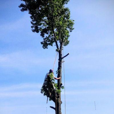 Kevin's Tree Service Columbus, OH Thumbtack