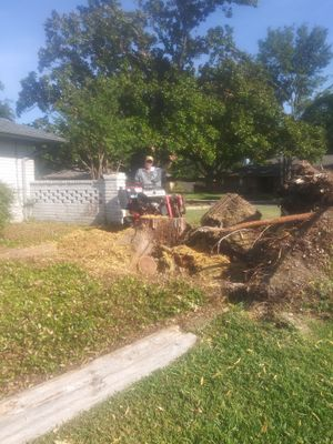 Seasons Best Tree Service Dallas, TX Thumbtack