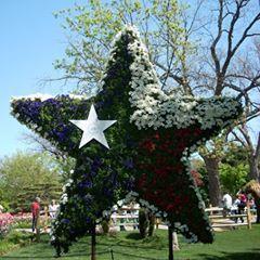LAUREN Dallas, TX Thumbtack