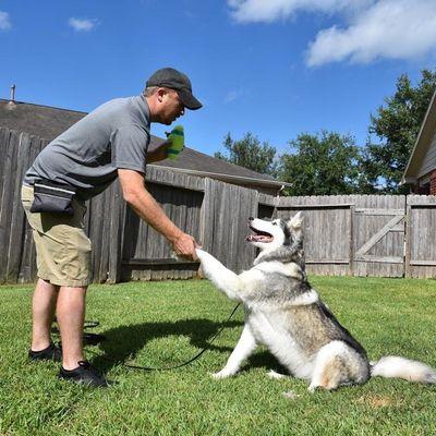 Canine Initiative Training LLC Katy, TX Thumbtack