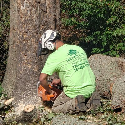 HPH Tree Service and Landscape Corp. Stoughton, MA Thumbtack