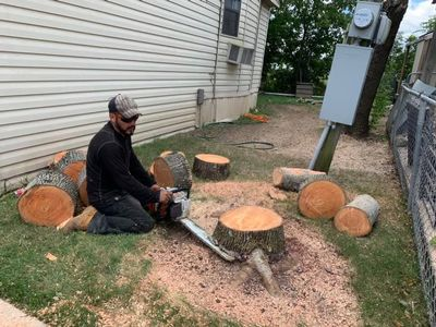 Ugarte tree service Austin, TX Thumbtack