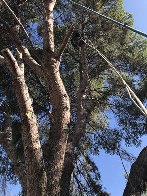 Ops tree service pros Mesa, AZ Thumbtack