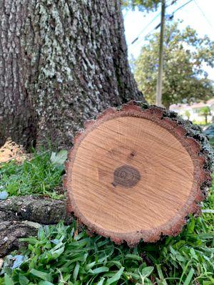 Rings Tree Service New Orleans, LA Thumbtack