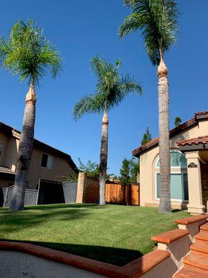 Regs Tree Services Corona, CA Thumbtack