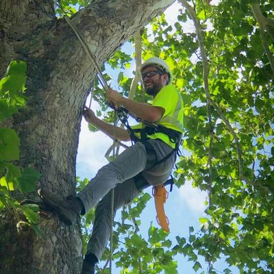 Tree Care West Des Moines, IA Thumbtack