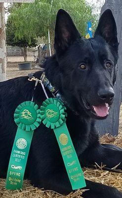 Leashless Dog Training Menifee, CA Thumbtack